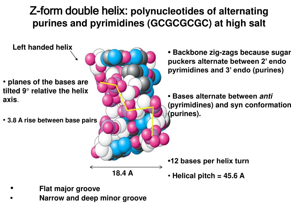 Z-form double helix: