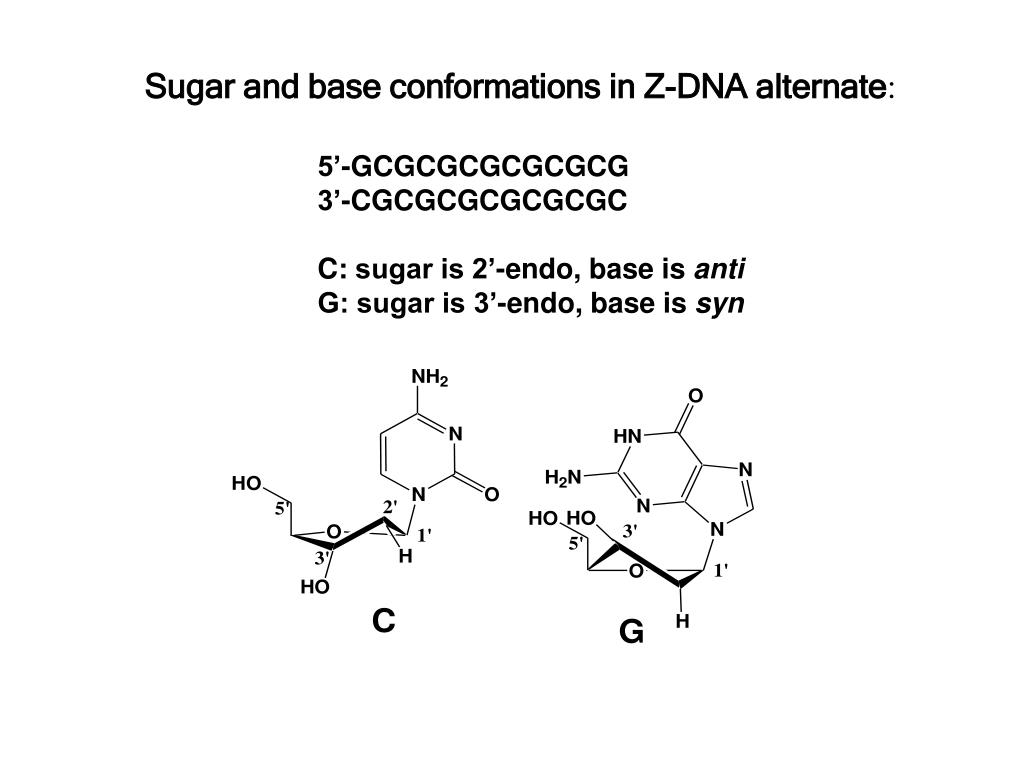 Sugar and base conformations in Z-DNA alternate