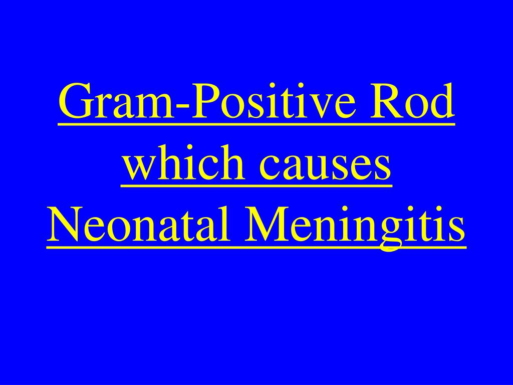 Gram-Positive Rod which causes Neonatal Meningitis