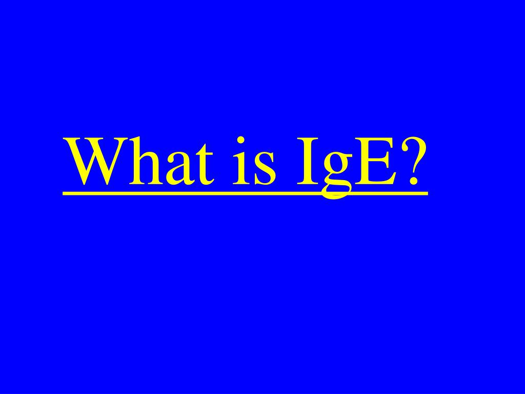What is IgE?