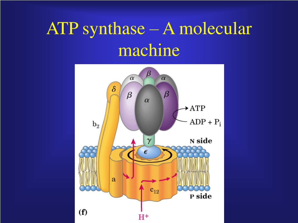ATP synthase – A molecular machine