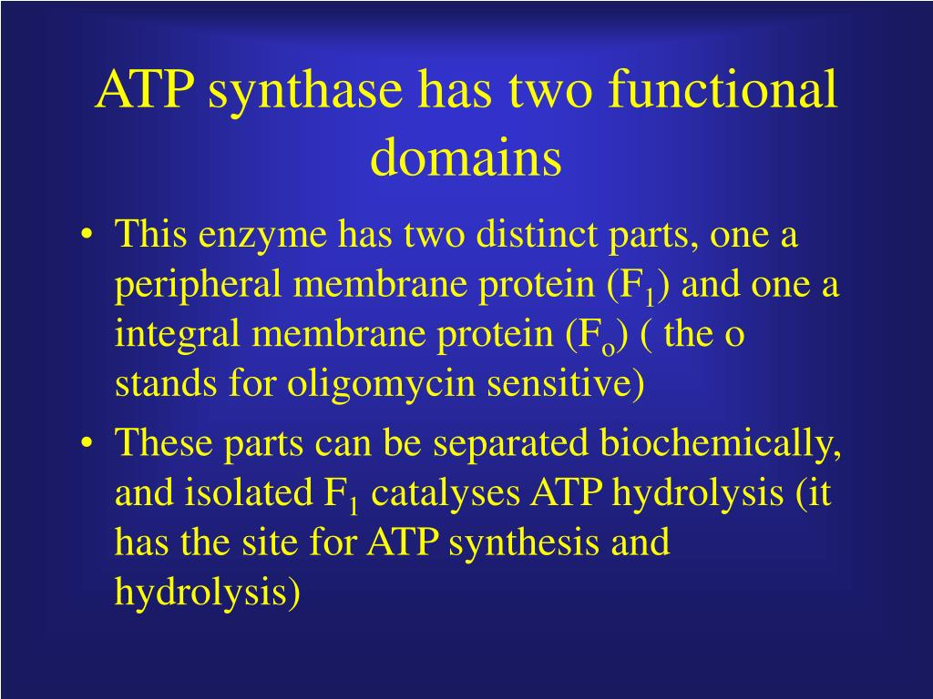 ATP synthase has two functional domains