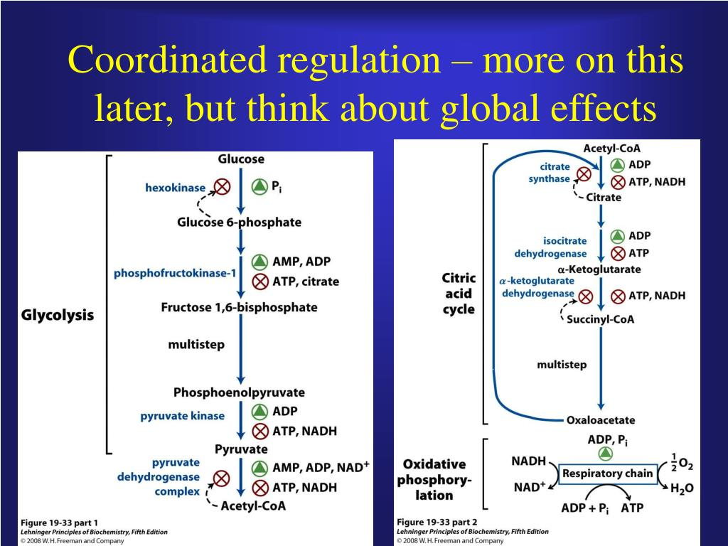 Coordinated regulation – more on this later, but think about global effects