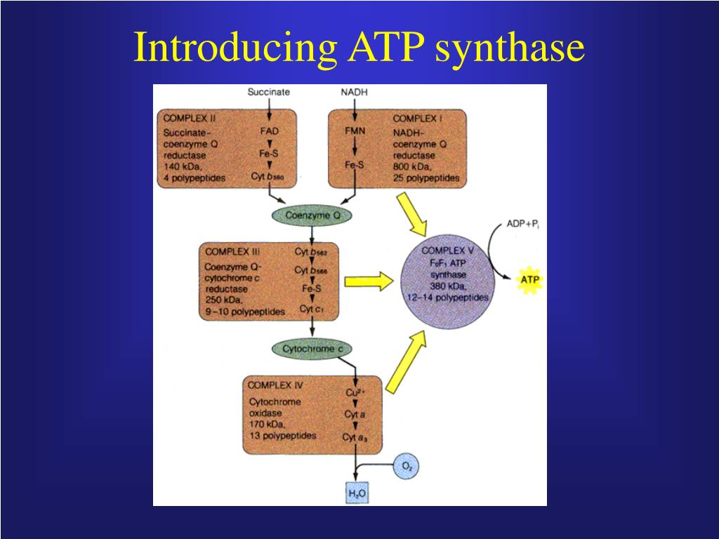 Introducing ATP synthase