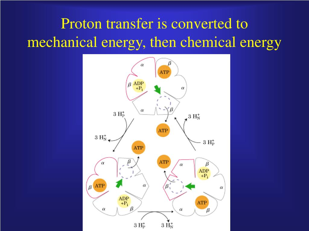 Proton transfer is converted to mechanical energy, then chemical energy