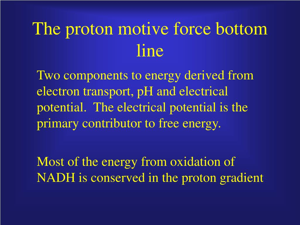 The proton motive force bottom line