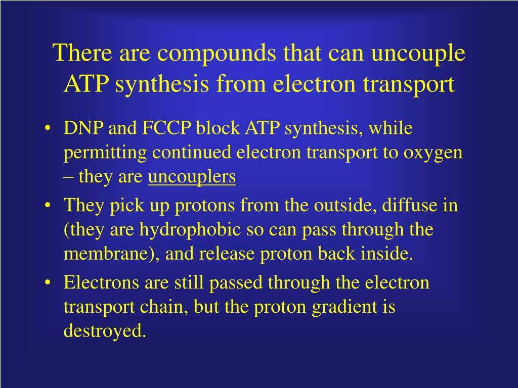 There are compounds that can uncouple ATP synthesis from electron transport