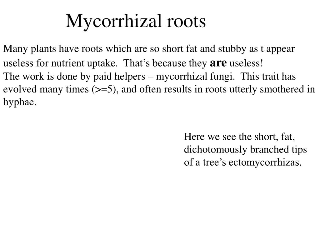 Mycorrhizal roots