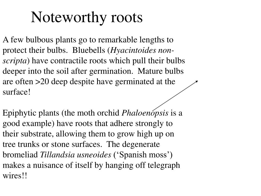 Noteworthy roots