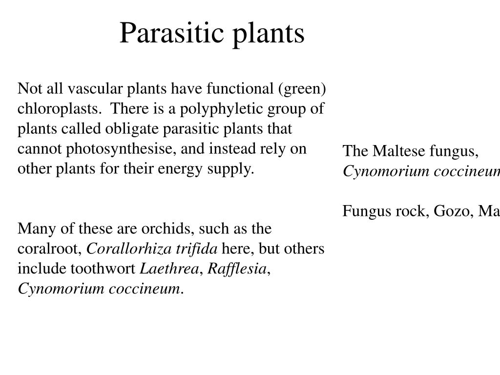 Parasitic plants