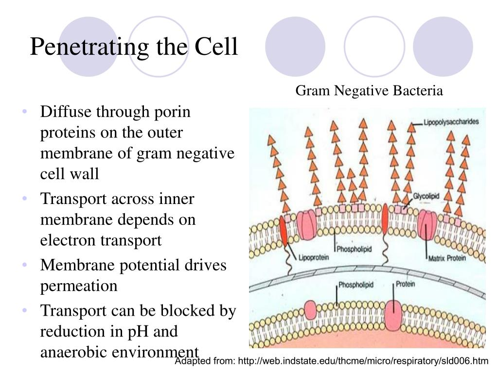 Penetrating the Cell