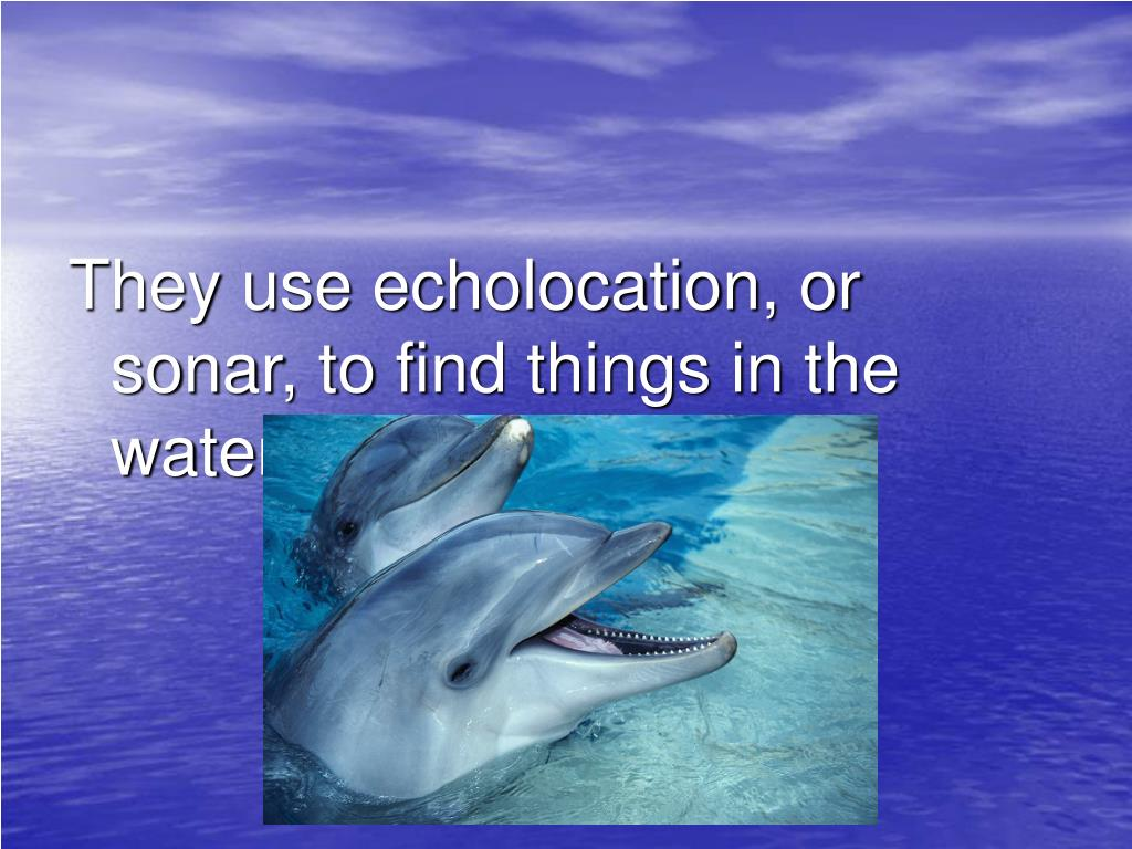 They use echolocation, or sonar, to find things in the water.