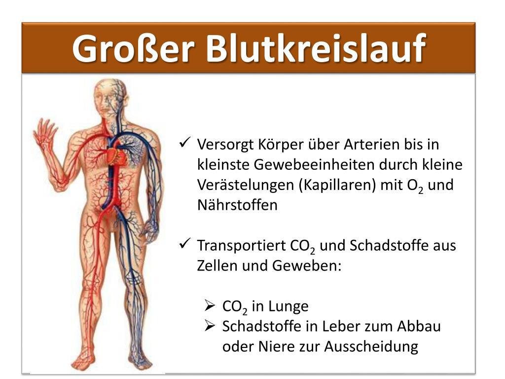 PPT - Blut Bestandteile und Funktionen PowerPoint..