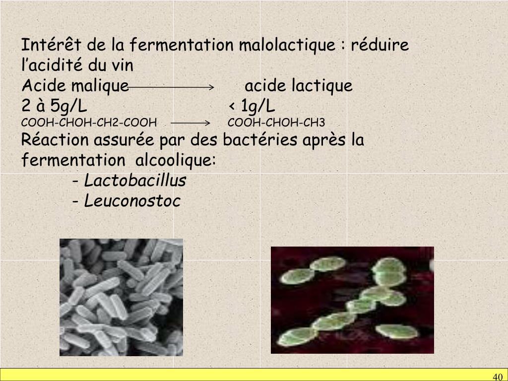 Intérêt de la fermentation malolactique : réduire l'acidité du vin