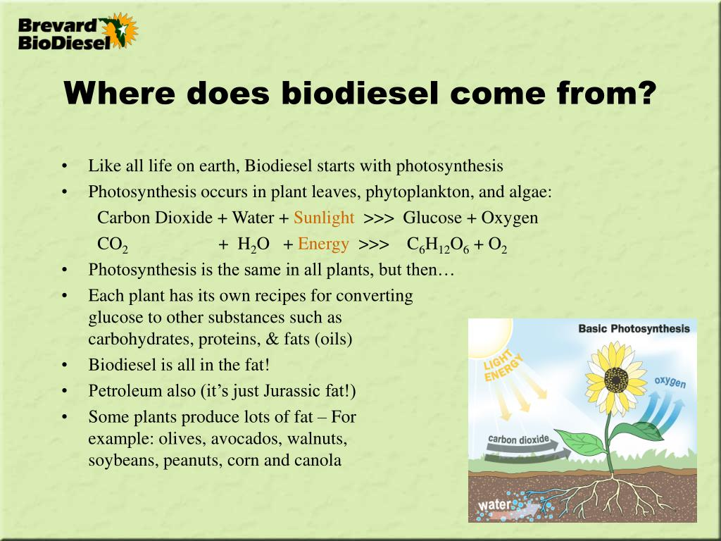 Where does biodiesel come from?