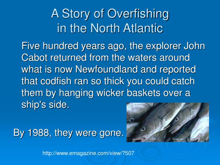 A story of overfishing in the north atlantic