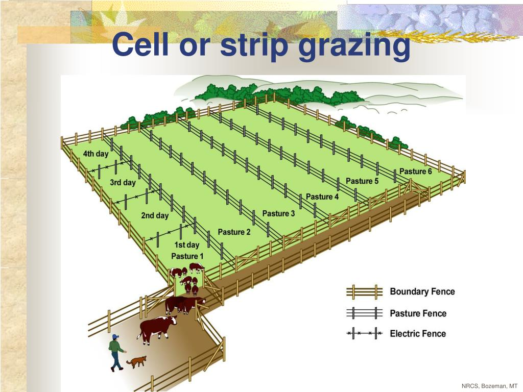 Cell or strip grazing