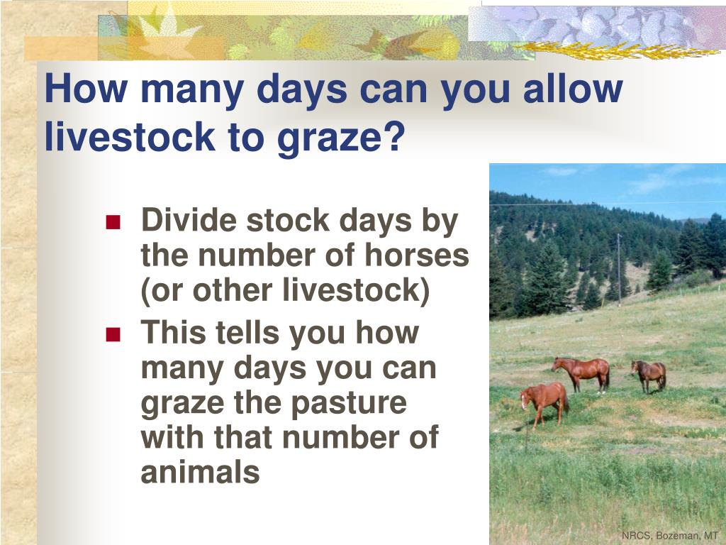 How many days can you allow livestock to graze?