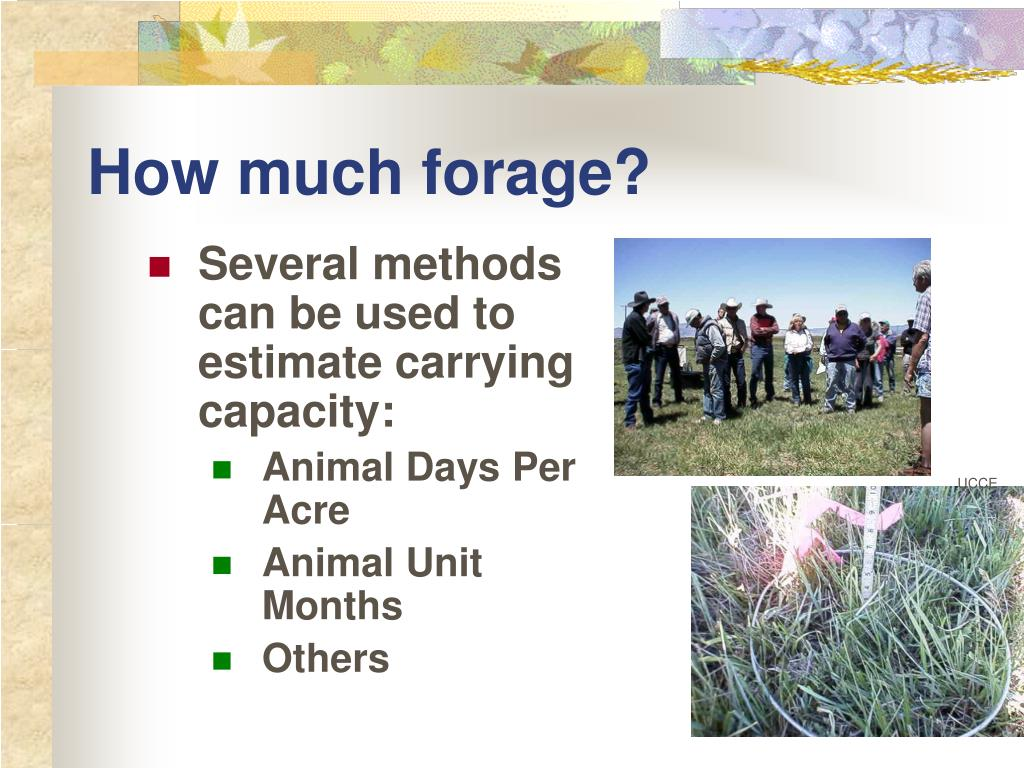 How much forage?