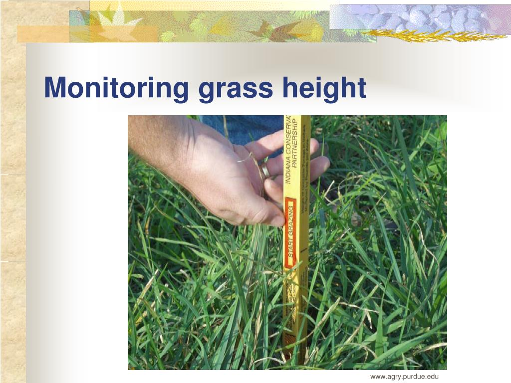 Monitoring grass height