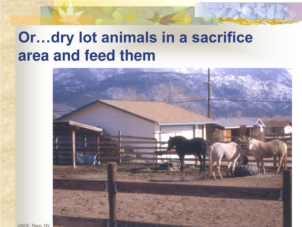 Or…dry lot animals in a sacrifice area and feed them