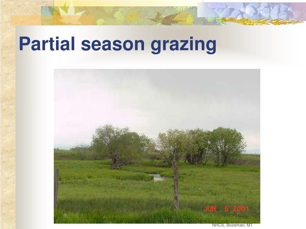 Partial season grazing