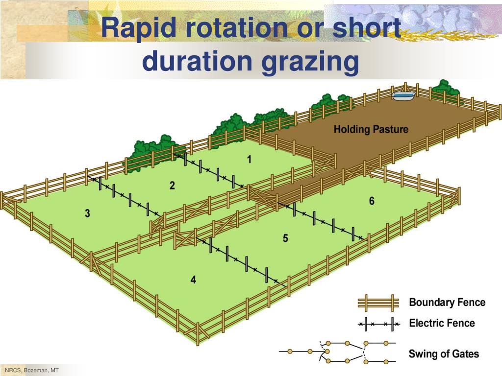 Rapid rotation or short duration grazing