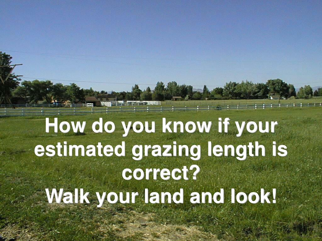 How do you know if your estimated grazing length is correct?