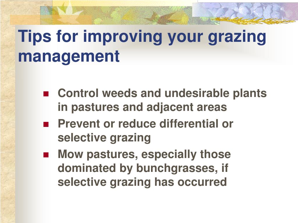 Tips for improving your grazing management