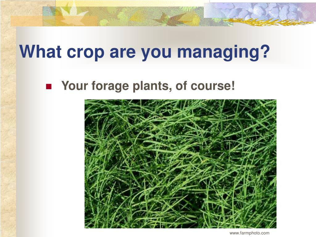 What crop are you managing?