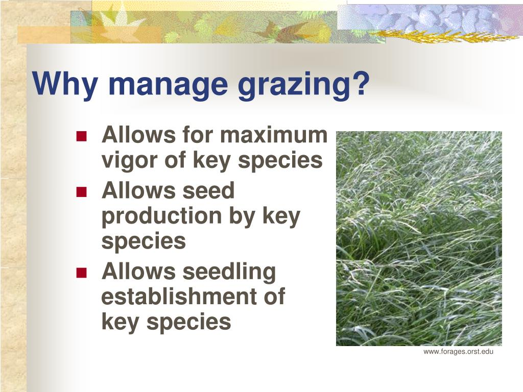 Why manage grazing?