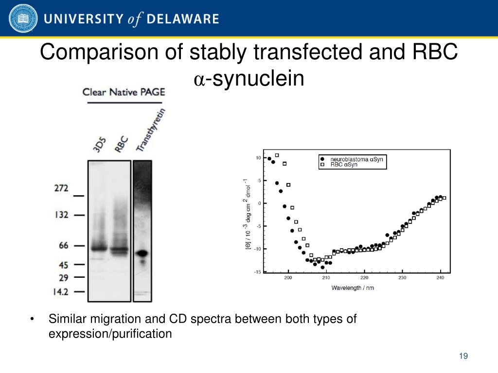 Comparison of stably transfected and RBC