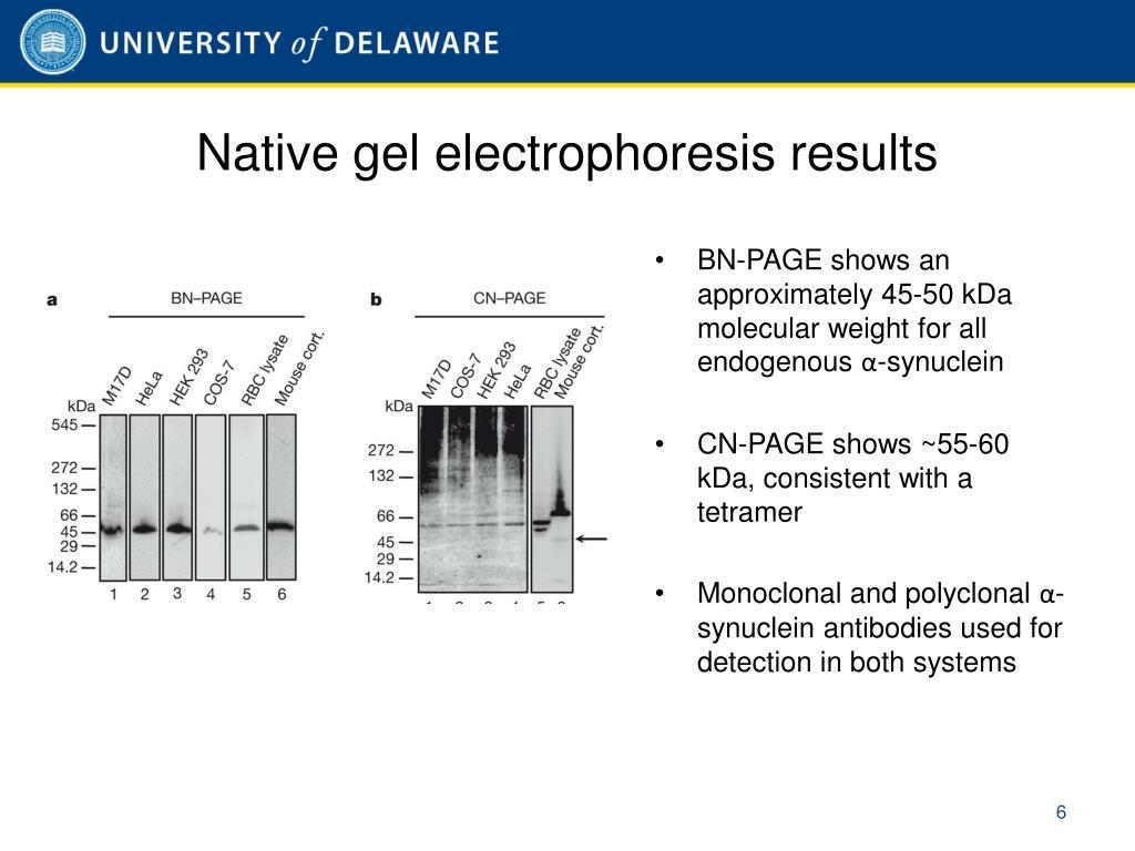 Native gel electrophoresis results