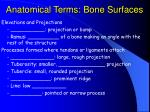 anatomical terms bone surfaces