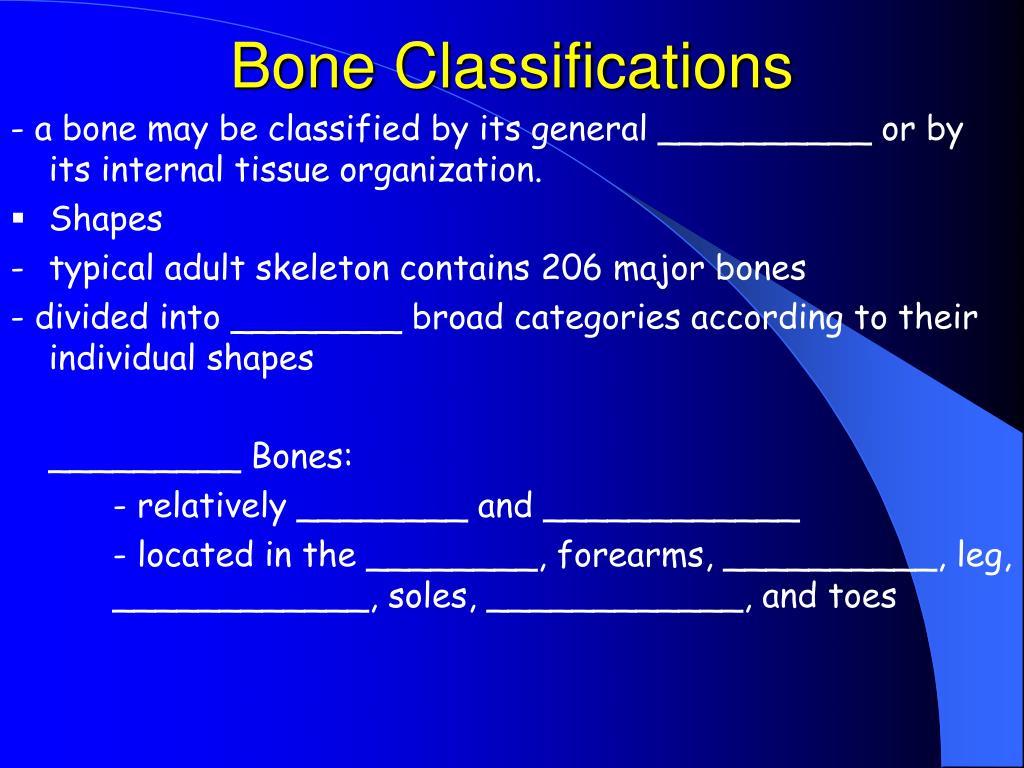 Bone Classifications