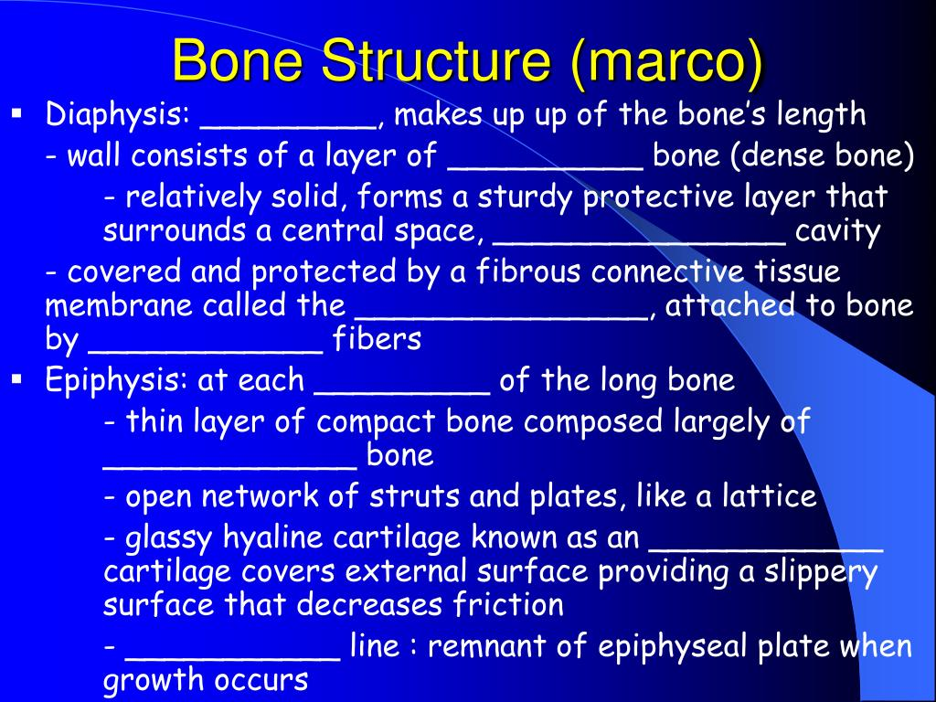 Bone Structure (marco)