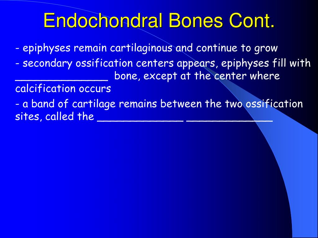 Endochondral Bones Cont.