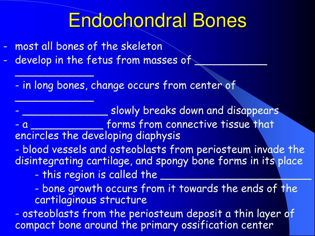 Endochondral Bones