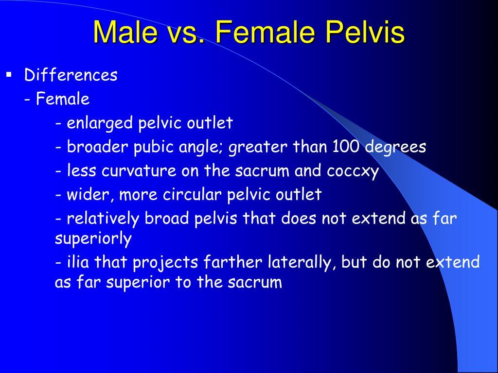 Male vs. Female Pelvis