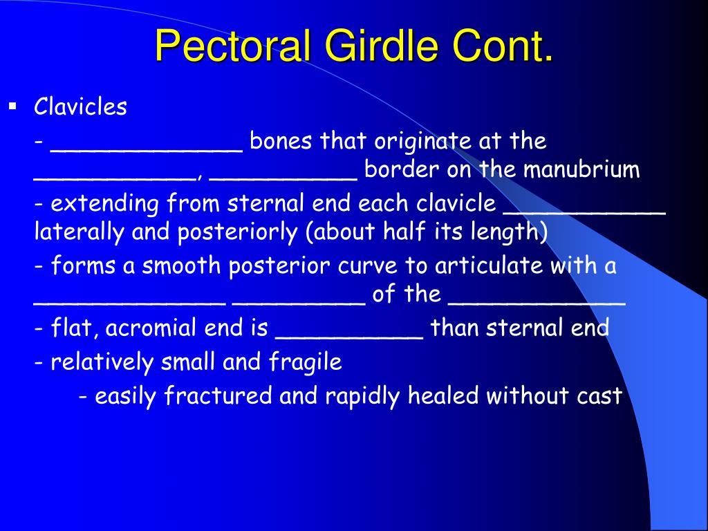 Pectoral Girdle Cont.
