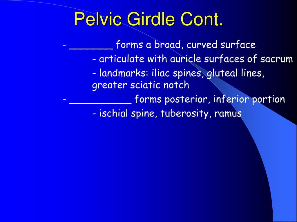 Pelvic Girdle Cont.