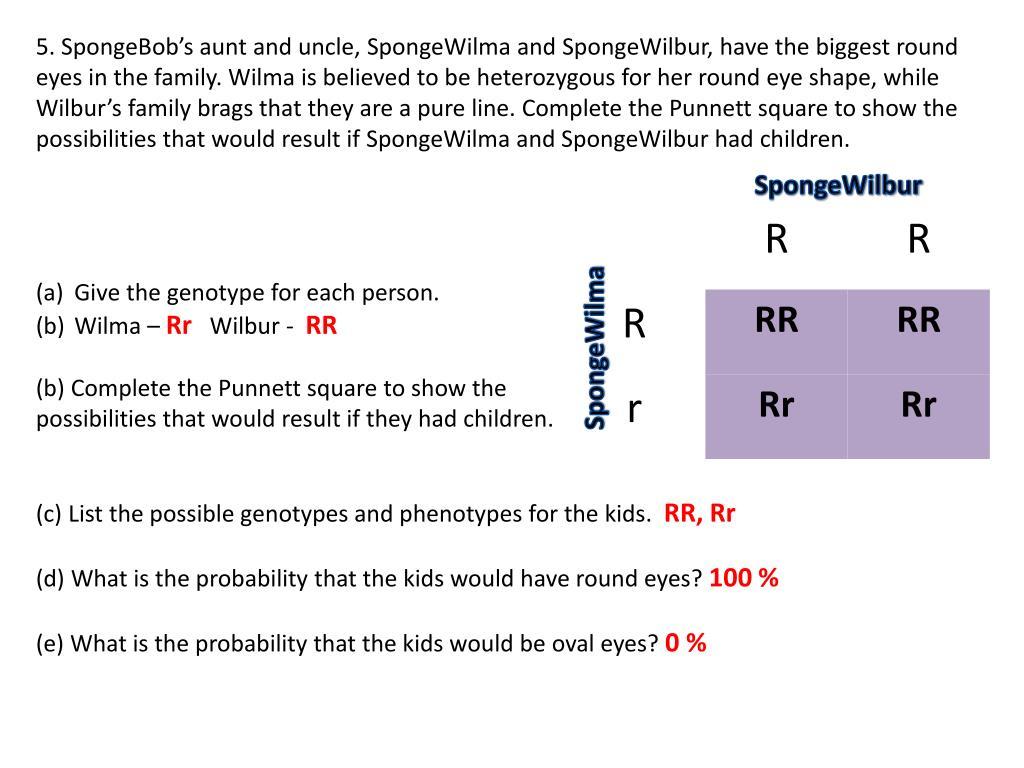 Uncategorized Spongebob Punnett Square Worksheet ppt spongebob genetics 1 2 powerpoint presentation id525378 spongebobs aunt and uncle