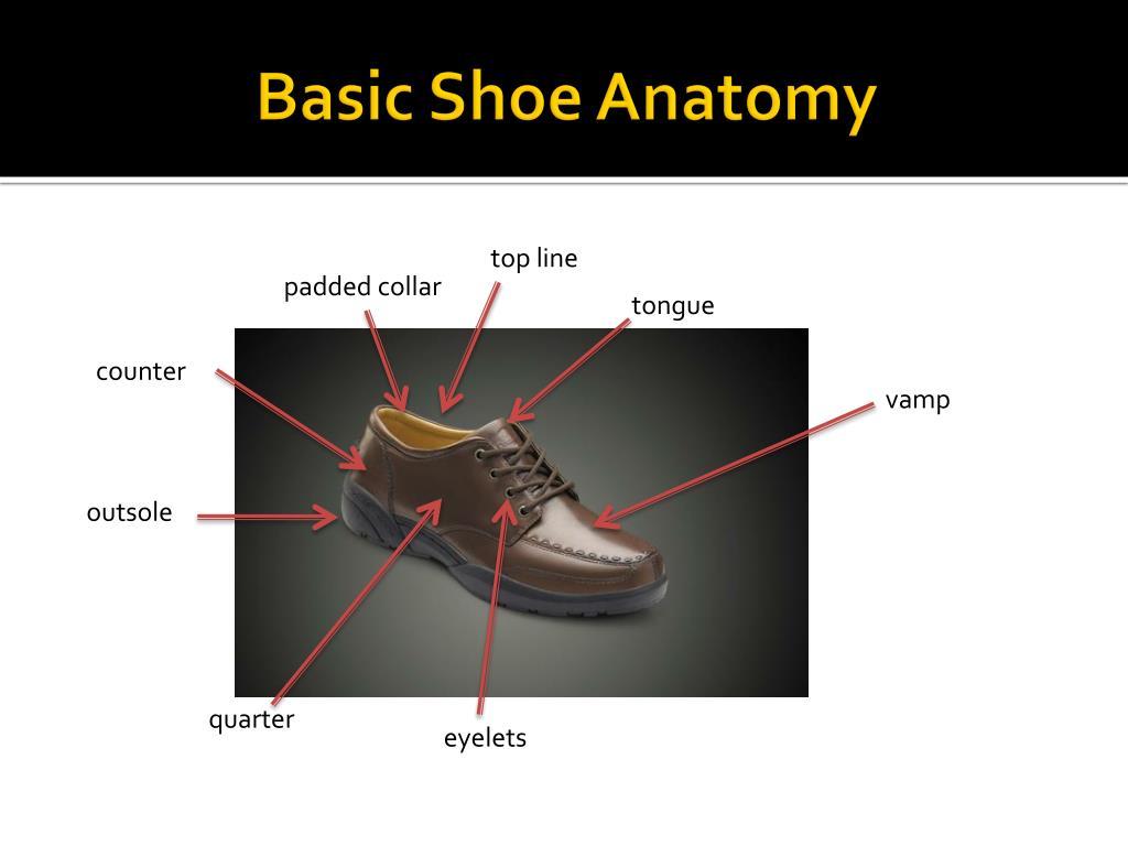 Basic Shoe Anatomy