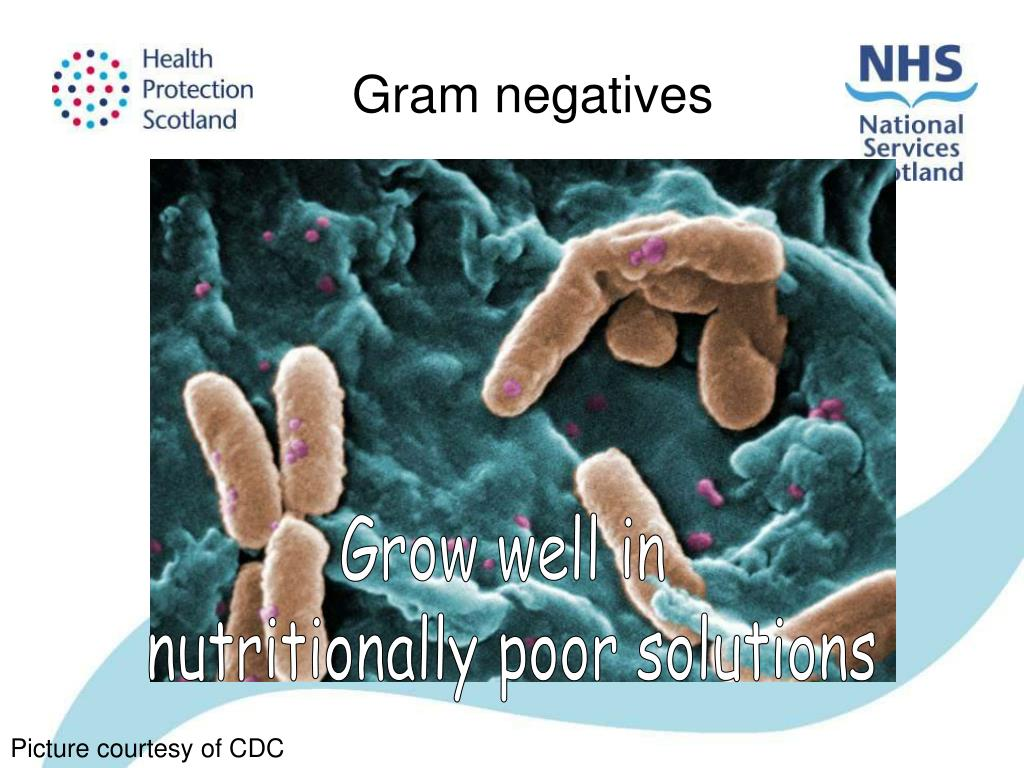 Gram negatives