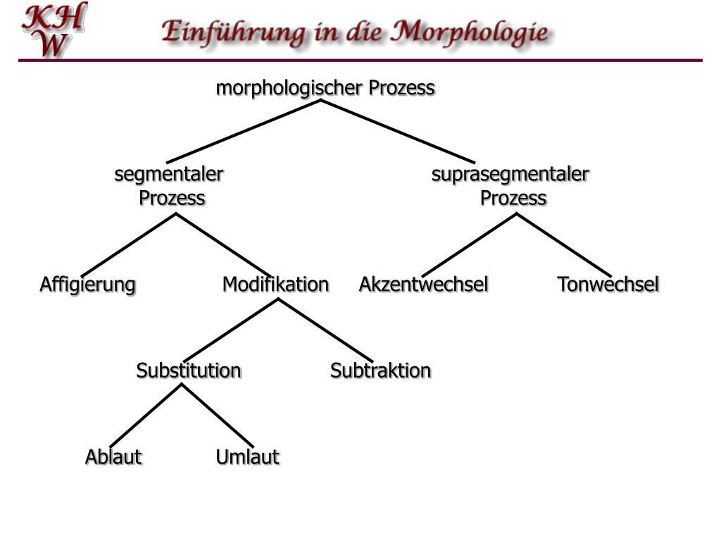 segmentaler