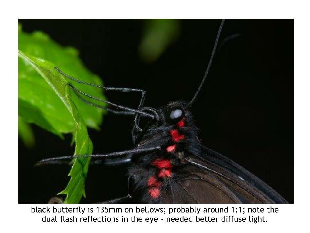 black butterfly is 135mm on bellows; probably around 1:1; note the