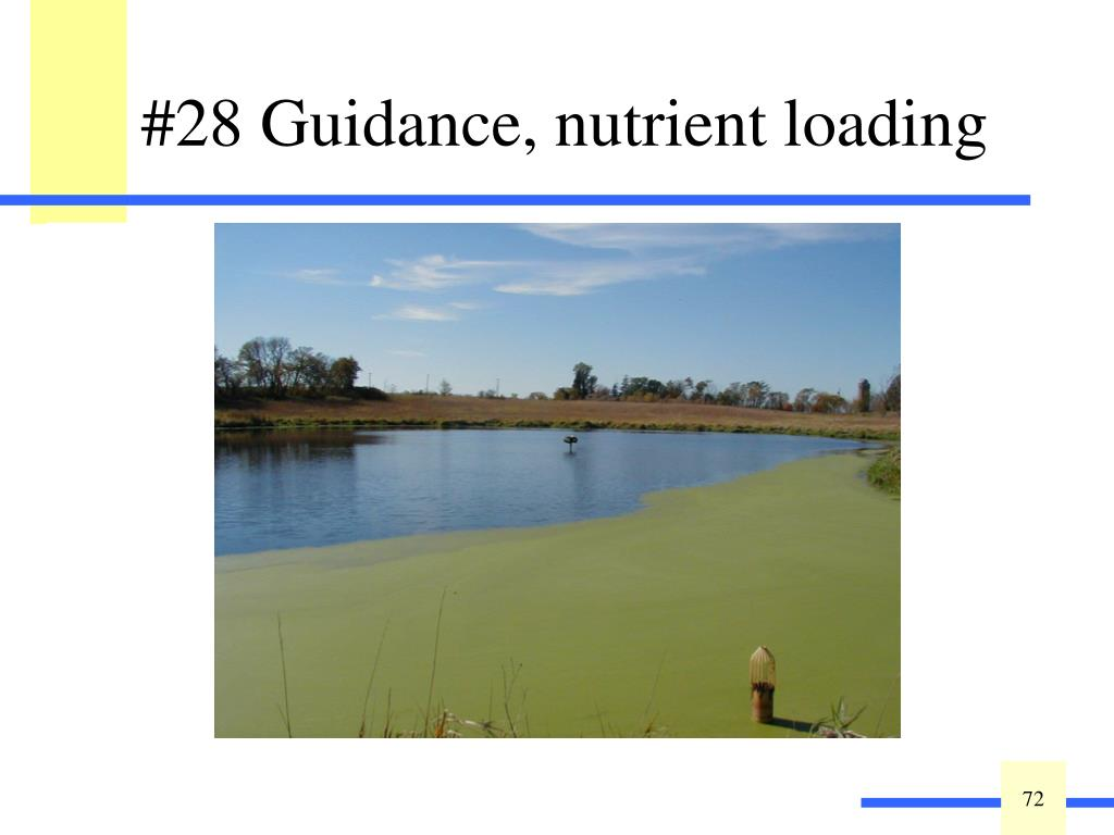Excessive nutrient loading to a wetland can cause nuisance algal blooms and the production of monotypic stands of invasive or weed species. Observed point source or nonpoint source of nutrients may include but is not limited to:  fertilized lawns, agricultural runoff, manure storage or spreading, concentrated stormwater runoff, or pet waste inputs.