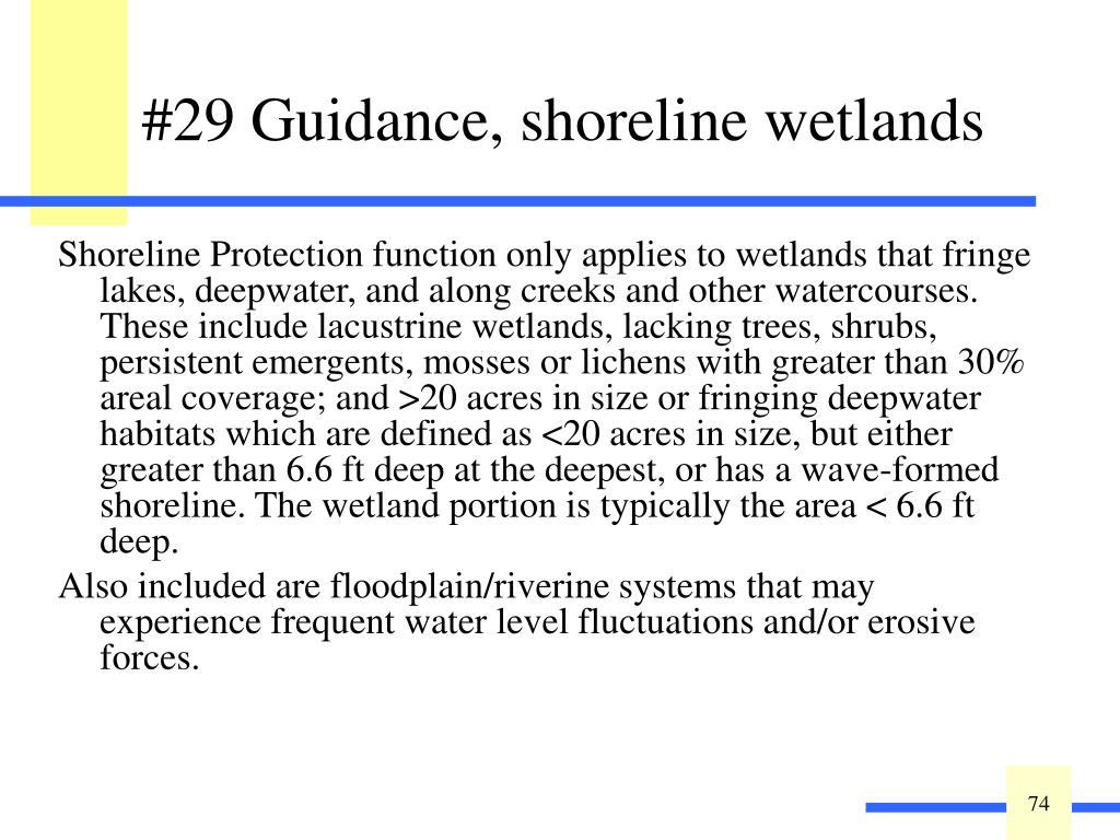 Shoreline Protection function only applies to wetlands that fringe lakes, deepwater, and along creeks and other watercourses. These include lacustrine wetlands, lacking trees, shrubs, persistent emergents, mosses or lichens with greater than 30% areal coverage; and >20 acres in size or fringing deepwater habitats which are defined as <20 acres in size, but either greater than 6.6 ft deep at the deepest, or has a wave-formed shoreline. The wetland portion is typically the area < 6.6 ft deep.