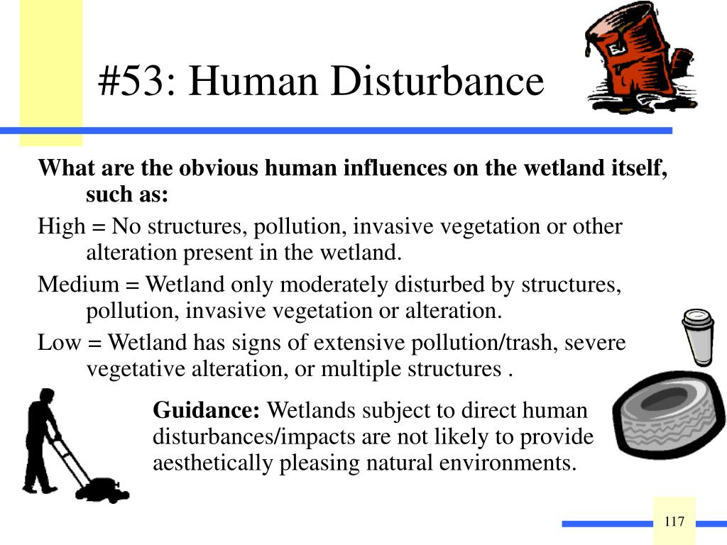 What are the obvious human influences on the wetland itself, such as:
