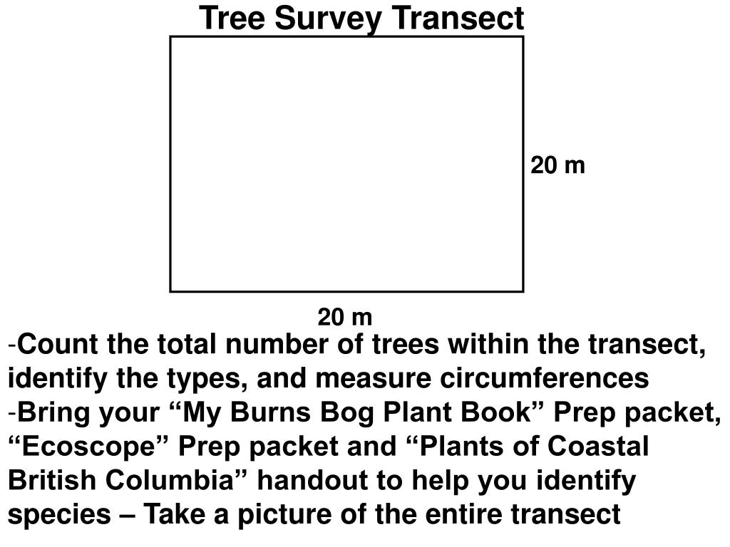 Tree Survey Transect